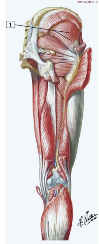 Netters Atlas Of Human Anatomy 5th Ed Asymptomaticlife